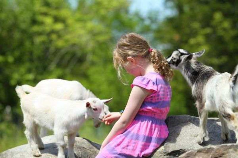 SEJOUR ANIMAUX ET MONTAGNE 13 jours - Haute-Savoie - 6/12 ans